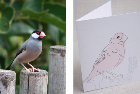 sparrow&card