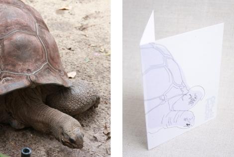 tortoise&card
